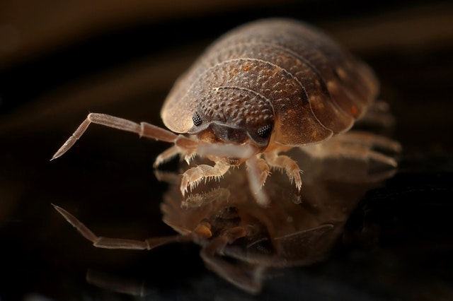 Can Bed Bugs Be Completely Eliminated