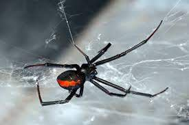 Do Exterminators Get Rid of Spiders?